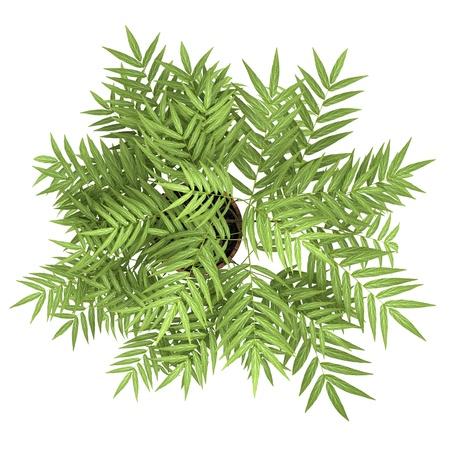 白い背景で隔離の鍋で装飾的な木の上から見る 写真素材