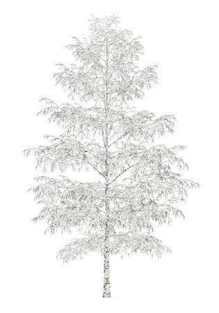Birke im Winter auf weißem Hintergrund