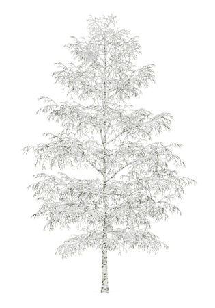 winter birch tree isolated on white background