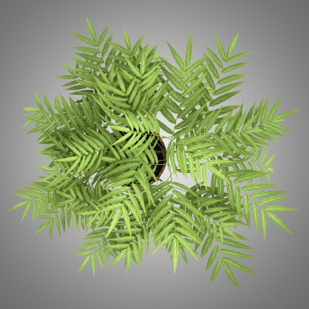 houseplant: top view of decorative tree in pot isolated on gray background