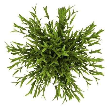 Draufsicht auf dekorative Zimmerpflanze in gelb Topf isoliert auf wei?m Hintergrund Standard-Bild