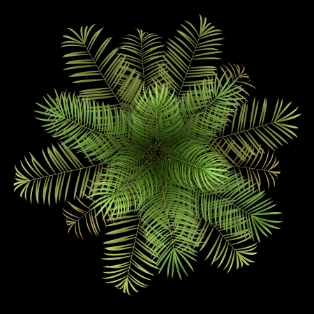top view of sugar palm tree isolated on black background Stock Photo