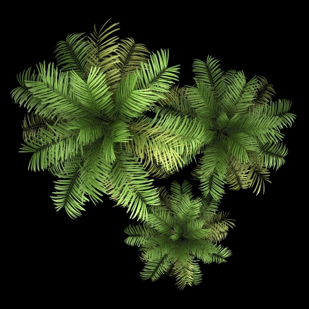 top view of three areca palm trees isolated on black background