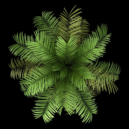 top view of areca palm tree isolated on black background photo