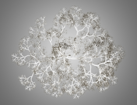top view of winter english oak tree isolated on gray background photo