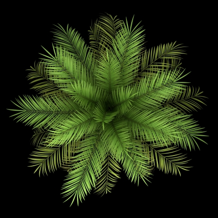 top view of date palm tree isolated on black background