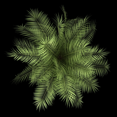subtropical plants: top view of palm tree isolated on black background Stock Photo