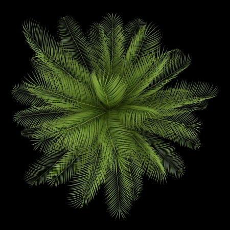 top view of oil palm tree isolated on black background