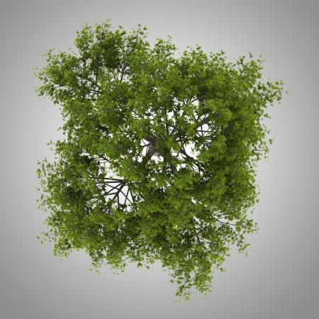 균열 버드 나무 트리의 상위 뷰는 회색 배경에 고립