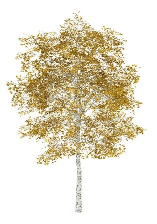 자작 나무는 흰색 배경에 고립 가을