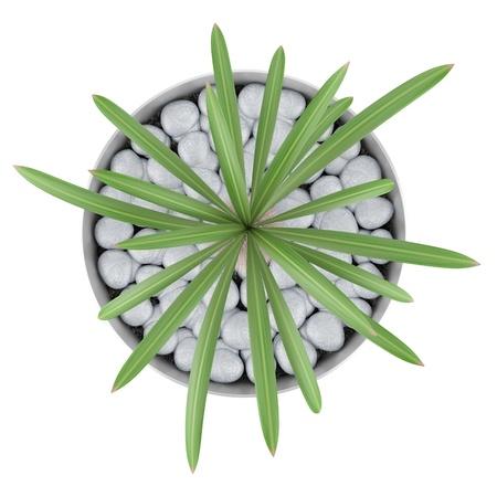 냄비에 선인장 식물의 상위 뷰 흰색 배경에 고립