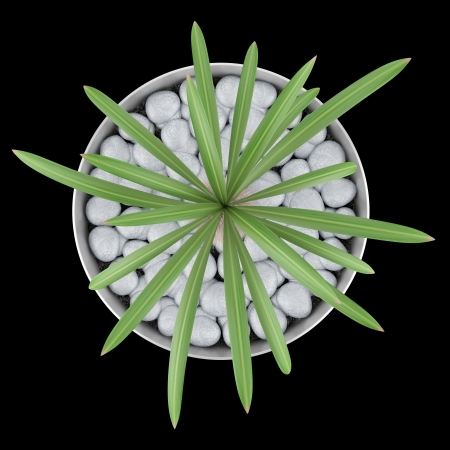 potted plant cactus: top view of cactus plant in pot isolated on black background