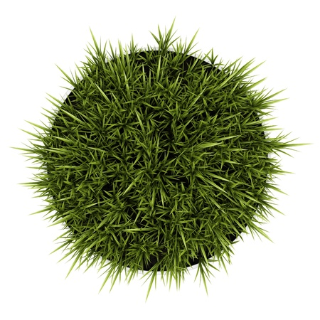 top view of decorative grass in pot isolated on white background photo