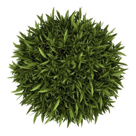 plante: vue de dessus d'oranger en pot isolé sur fond blanc