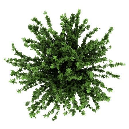 白い背景で隔離の鍋で装飾的な植物の上から見る
