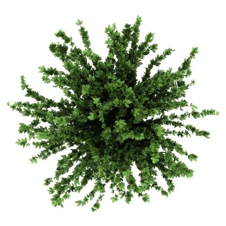 bovenaanzicht van decoratieve plant in pot geïsoleerd op witte achtergrond Stockfoto