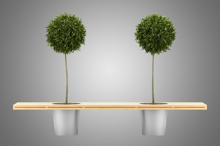 bench with two potted orange trees isolated on gray background photo