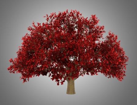 ironwood: persian ironwood tree isolated on gray background