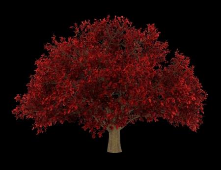 ironwood: persian ironwood tree isolated on black background