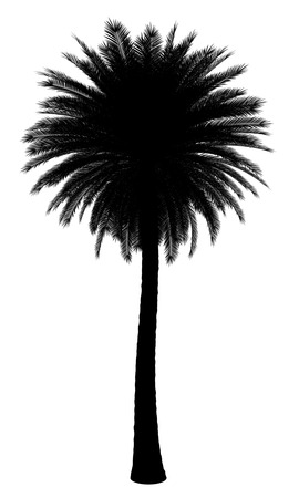 date palm tree: silhouette of canary island date palm tree isolated on white background