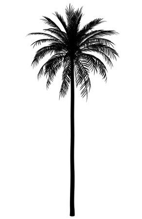 대추 나무의 실루엣 흰색 배경에 고립 스톡 콘텐츠