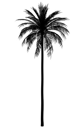 silhouette of date palm tree isolated on white background
