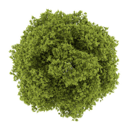 ashes: top view of white ash tree isolated on white background