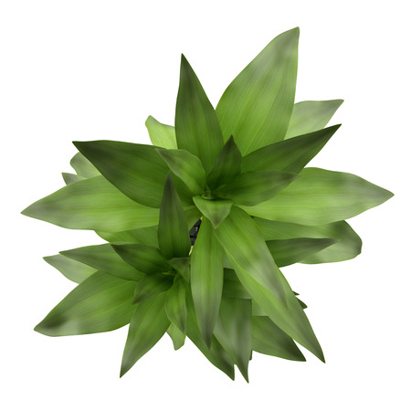 top view of bamboo plant in vase isolated on white background