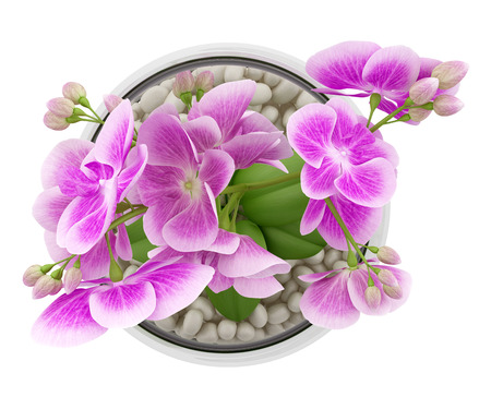 top view of purple orchid flower in glass vase isolated on white background photo