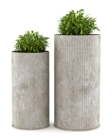 potted plants: two potted houseplants isolated on white background Stock Photo