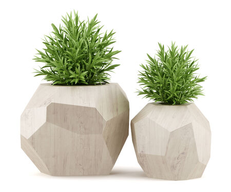 two houseplants in wooden pots isolated on white background Stok Fotoğraf