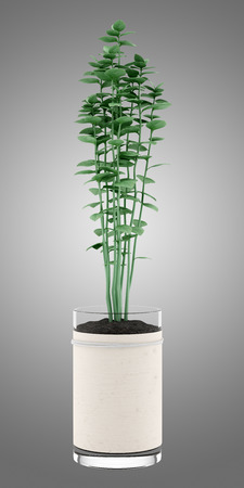oregano plant: oregano plant in pot isolated on gray background Stock Photo