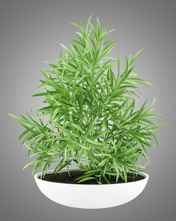 houseplant in pot isolated on gray background