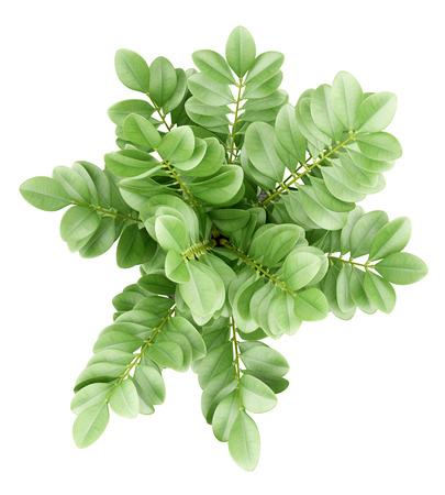 냄비에 관엽 식물의 상위 뷰 흰색 배경에 고립