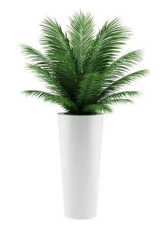 白い背景で隔離の鉢植えのヤシの木 写真素材