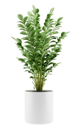 白い背景で隔離の鍋で観葉植物