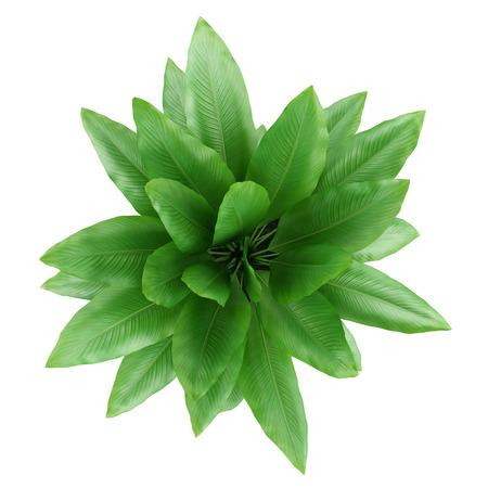 Vue de dessus de plante d'intérieur en pot isolé sur fond blanc Banque d'images - 33067702