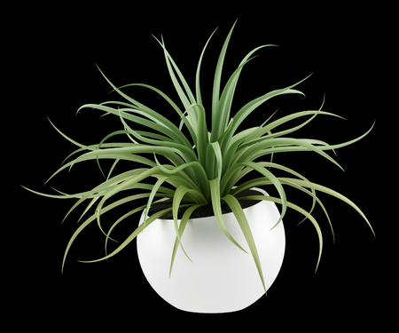 Potted plants: houseplant in pot isolated on black background