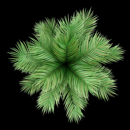 top view of potted palm tree isolated on black background