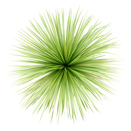 top view of potted palm tree isolated on white background