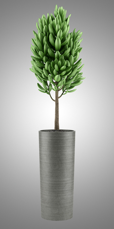 houseplant: houseplant in pot isolated on gray background