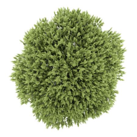 Vue de dessus de l'arbre de sumac vinaigrier isolé sur fond blanc Banque d'images - 38216439
