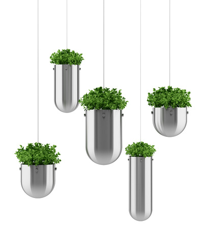 plant in pot: plants in hanging pots isolated on white background Stock Photo