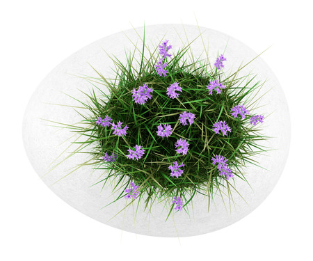 purple flower: top view of flowers with grass in concrete pot isolated on white background Stock Photo
