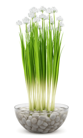 Potted plants: flowers in glass vase isolated on white background