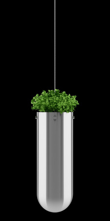 plant in pot: plant in hanging pot isolated on black background Stock Photo