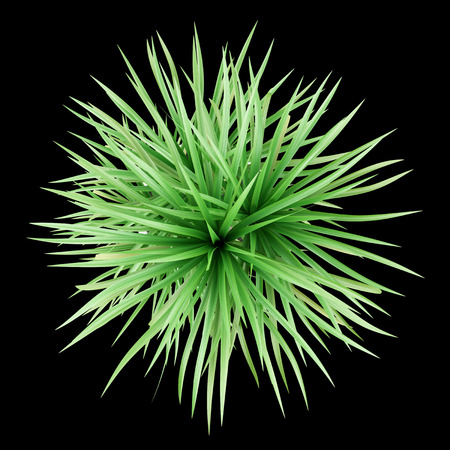 single tree: top view of potted dracena palnt isolated on black background Stock Photo