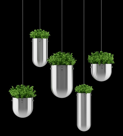 Potted plants: plants in hanging pots isolated on black background Stock Photo