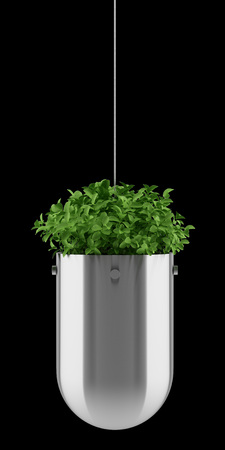 plant in hanging pot isolated on black background Stock Photo