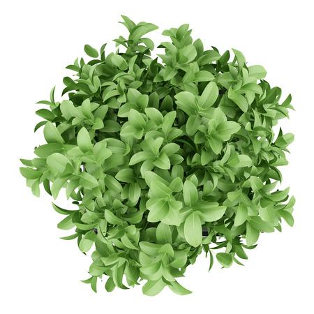 검은 냄비에 식물의 상위 뷰 흰색 배경에 고립